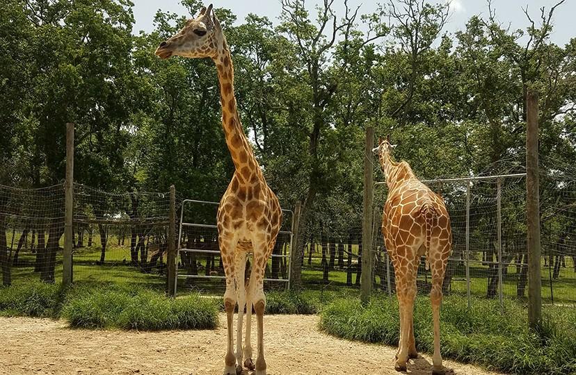 Bayou Wildlife Zoo, Bayou Wildlife Zoo Alvin, Alvin Zoo