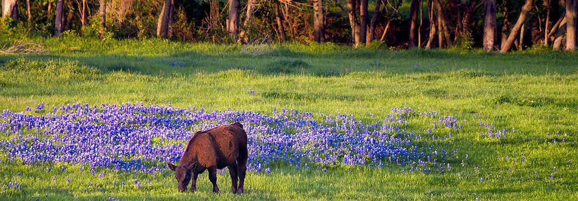 Brazoria Texas